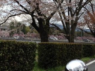「桜」諸々画像_f0201286_1632960.jpg