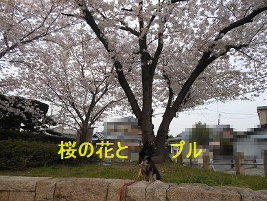 a0137294_18404073.jpg