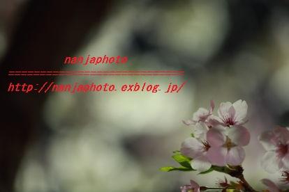 e0268999_344195.jpg