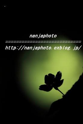 e0268999_349512.jpg
