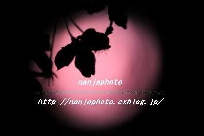 e0268999_3503813.jpg