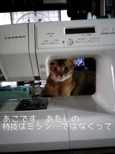 b0172702_1656637.jpg