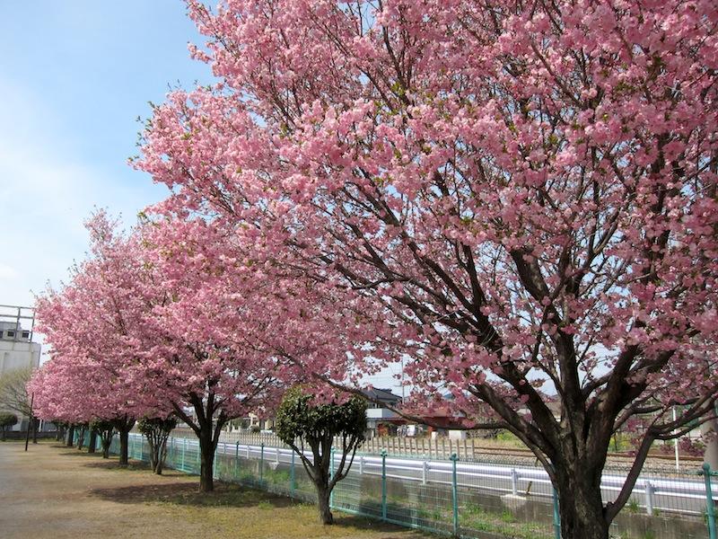 2012桜_f0138807_011058.jpg