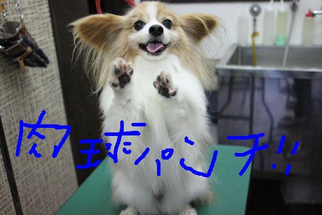 b0130018_18274490.jpg
