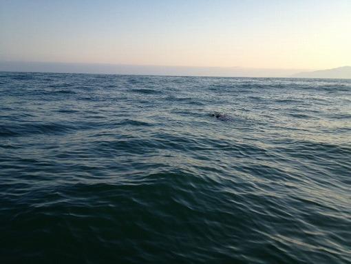 日本海でアシカと出会う_b0150120_13535363.jpg