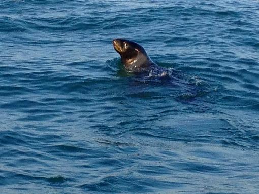 日本海でアシカと出会う_b0150120_13541388.jpg