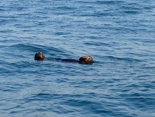 日本海でアシカと出会う_b0150120_1354356.jpg