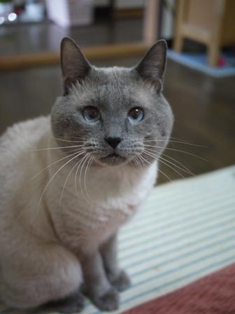 猫のお友だち カイくん編。_a0143140_23454836.jpg