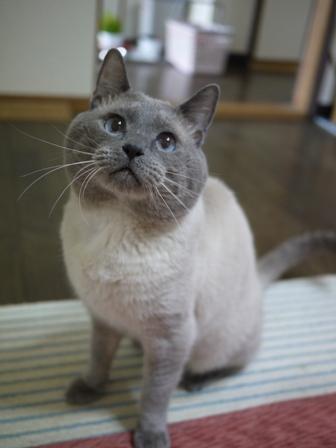 猫のお友だち カイくん編。_a0143140_23515864.jpg