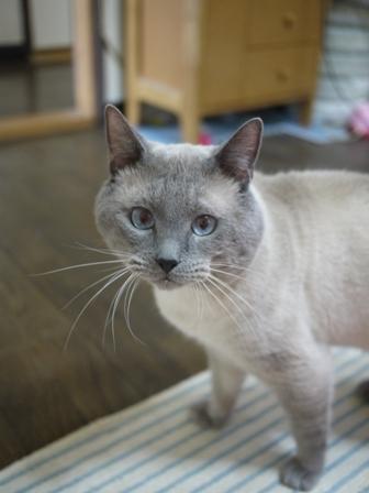 猫のお友だち カイくん編。_a0143140_23535749.jpg