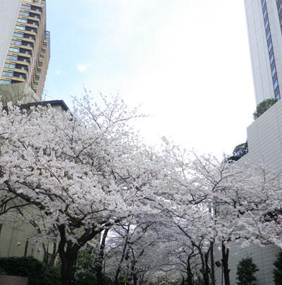 おめでとうございます!Mayumi先生 東京_c0196240_21555275.jpg