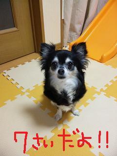 c0121141_041378.jpg