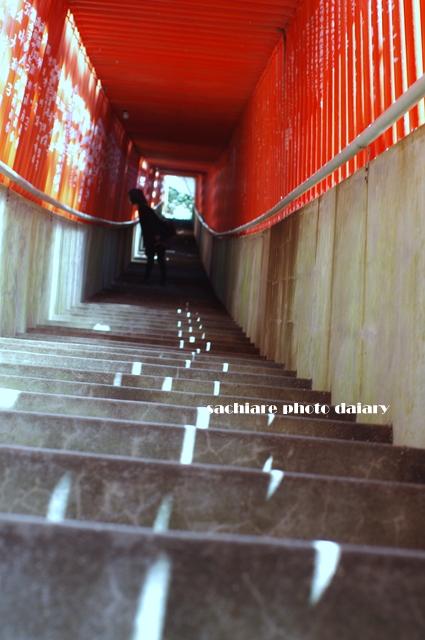 f0194243_2011540.jpg