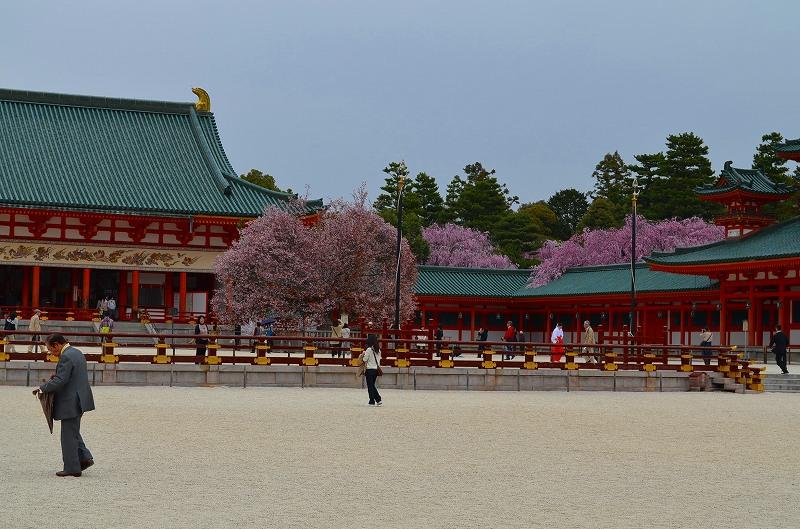 平安神宮周辺の桜便り_e0237645_16302647.jpg
