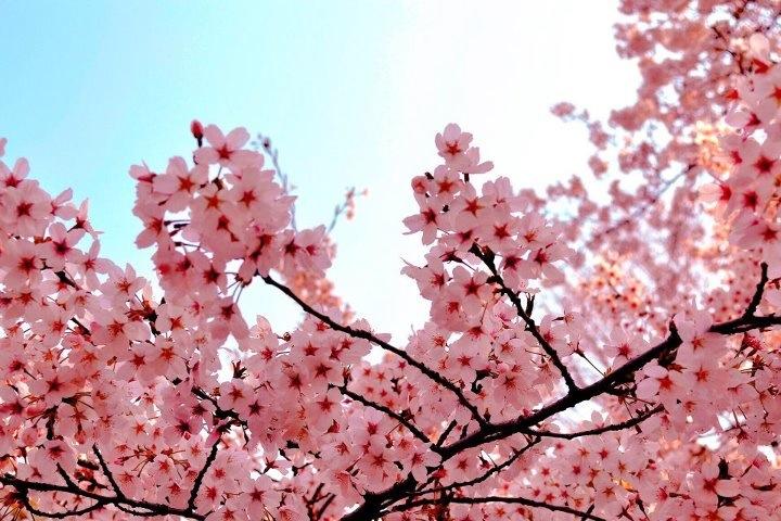 桜散る_c0246656_14203563.jpg