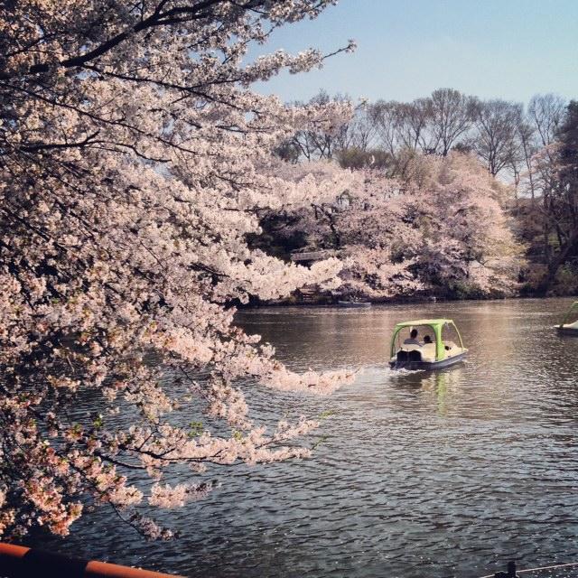 桜散る_c0246656_142857100.jpg