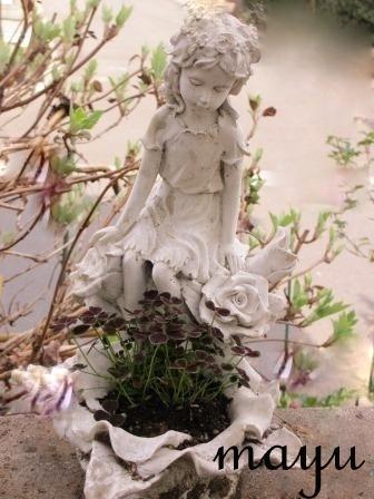 癒しのお花達♪_a0243064_0502431.jpg