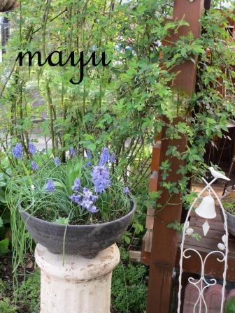 癒しのお花達♪_a0243064_0532784.jpg