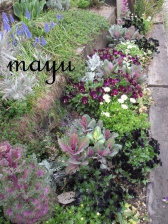癒しのお花達♪_a0243064_0535257.jpg