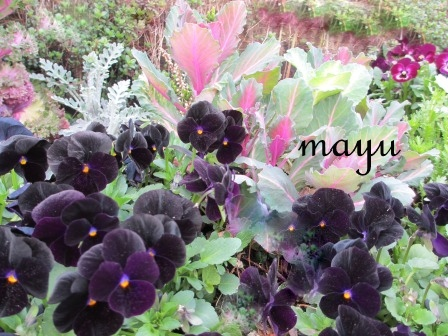 癒しのお花達♪_a0243064_0544022.jpg