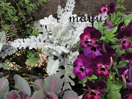 癒しのお花達♪_a0243064_055348.jpg