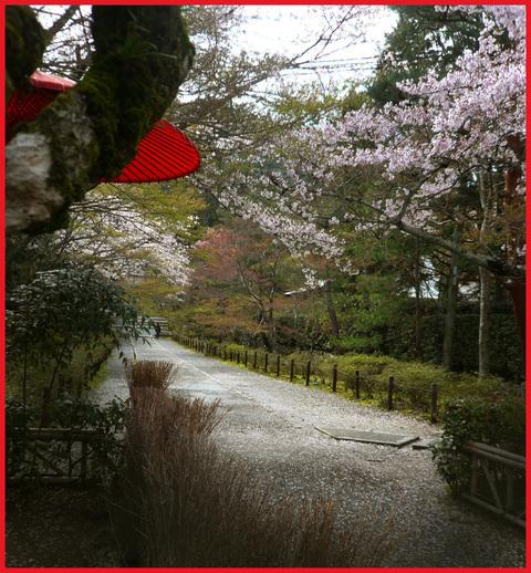 春をいただきに京都へ。旬を食べて、長生き・・・ネッ!_e0236072_1614054.jpg