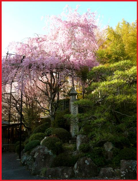 春をいただきに京都へ。旬を食べて、長生き・・・ネッ!_e0236072_16211475.jpg