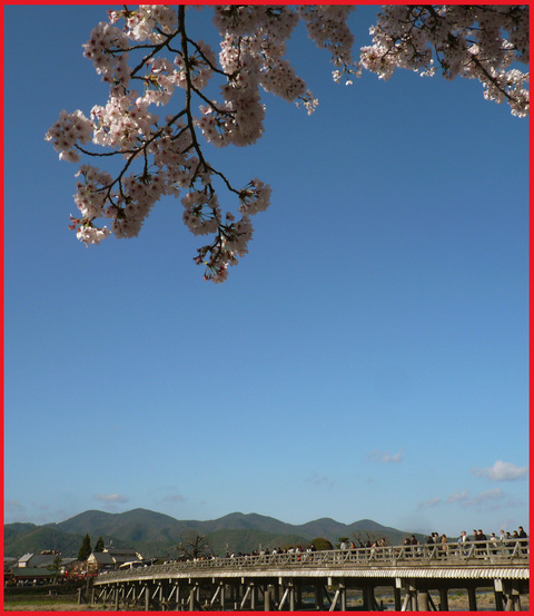 春をいただきに京都へ。旬を食べて、長生き・・・ネッ!_e0236072_168971.jpg