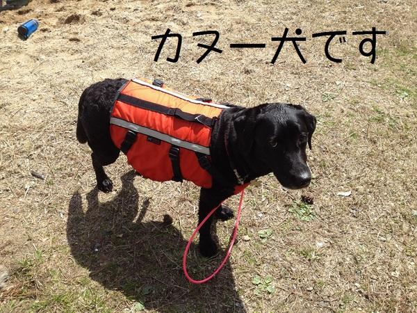 カヌーでお花見・海津大崎_e0244283_1754325.jpg