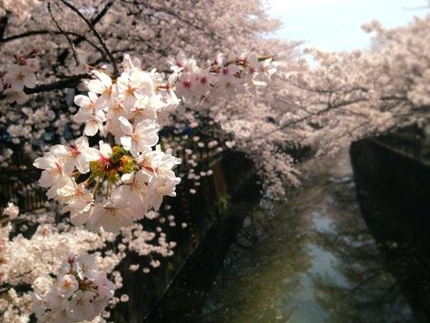 お花見散歩_f0110089_23152783.jpg