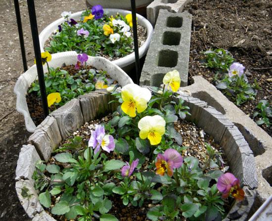植え替え、引っ越し、春の作業に大忙し(^^)_a0136293_19421149.jpg