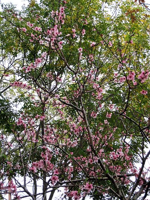 桃の花_e0016894_15561295.jpg