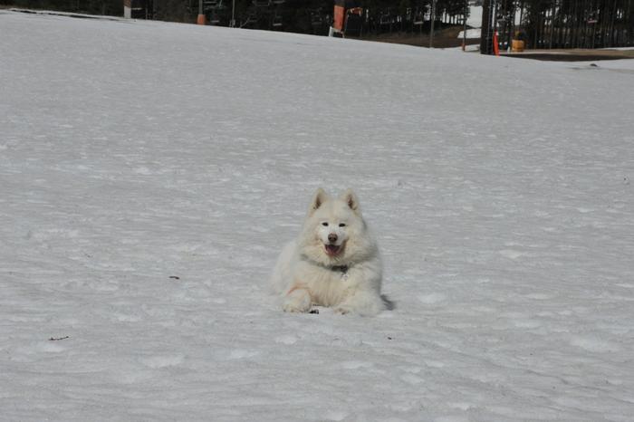 雪がある限り♪ part1_a0049296_1842677.jpg