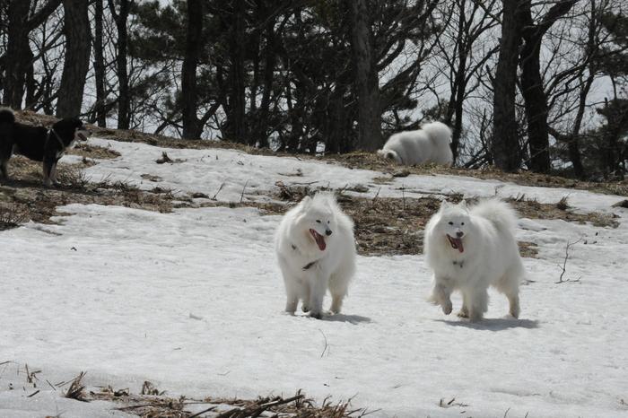 雪がある限り♪ part1_a0049296_18434873.jpg