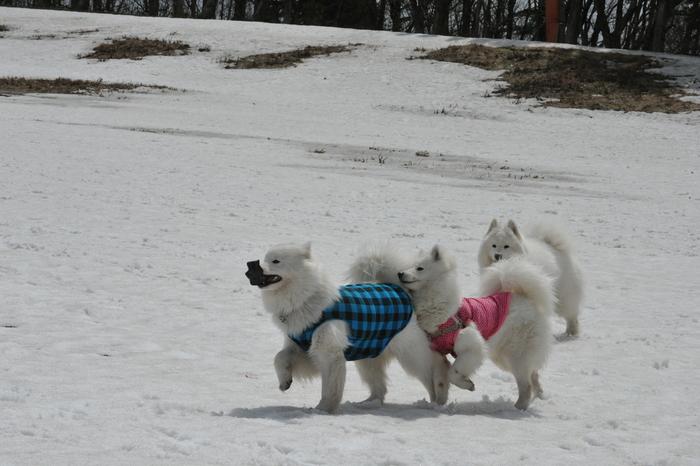 雪がある限り♪ part1_a0049296_18473990.jpg