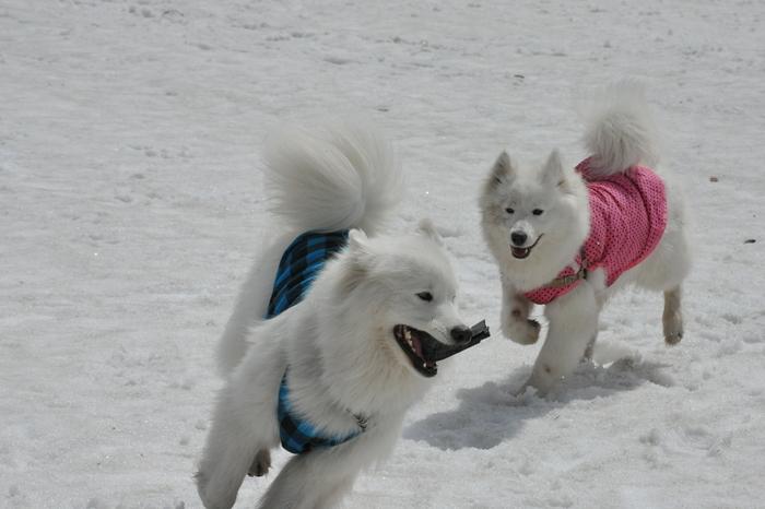 雪がある限り♪ part1_a0049296_1848378.jpg