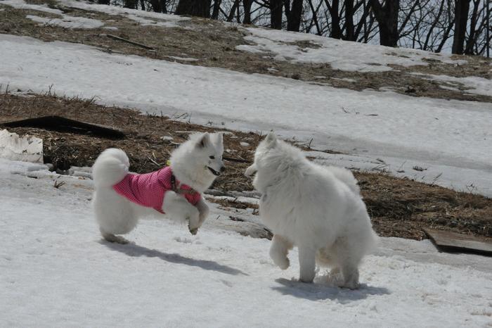 雪がある限り♪ part1_a0049296_19452360.jpg