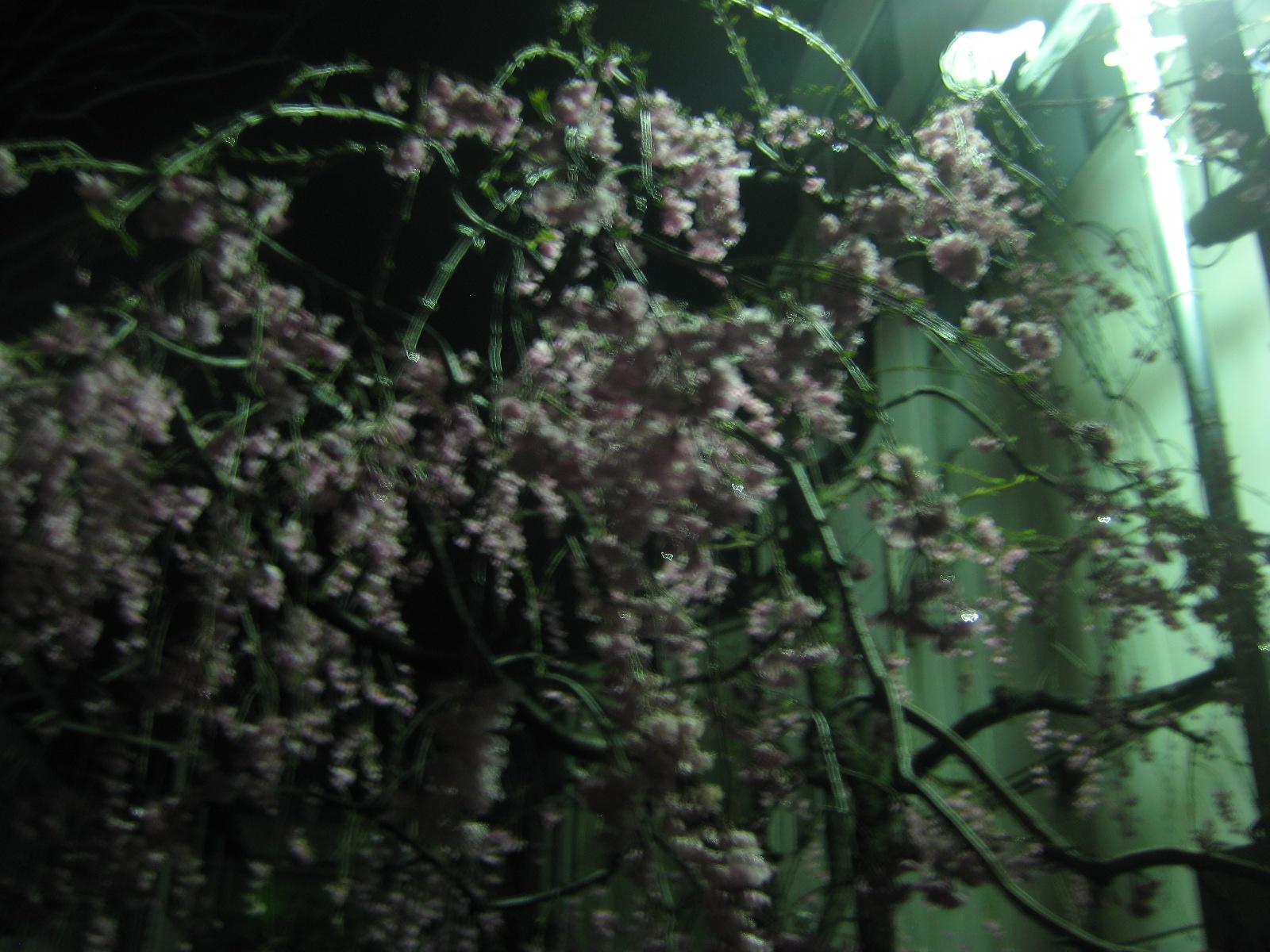 春・サクラ_b0134499_1225053.jpg