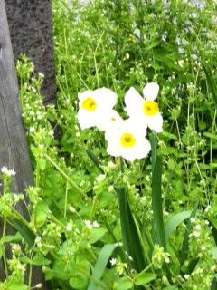 世界にひとつだけの花♪  NO.280_c0102513_22284172.jpg