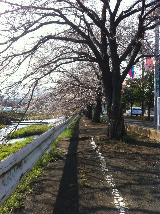 春の便り_b0213831_84777.jpg