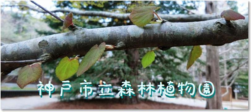 b0036638_1885681.jpg