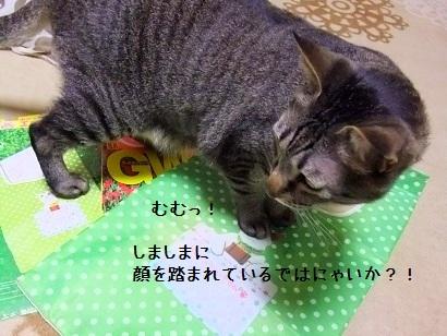 b0118850_1813999.jpg