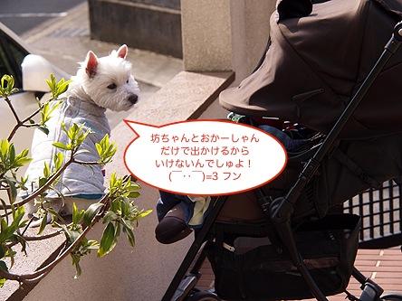 b0177868_1036193.jpg