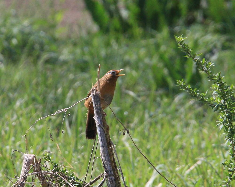 スジグロシロチョウ  なかなか翅裏を撮らせてくれない。 2012.4.15埼玉県②_a0146869_4201371.jpg