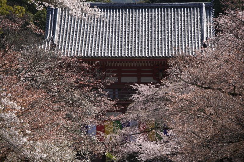 桜 2012  京都 <醍醐寺>_f0021869_23252332.jpg