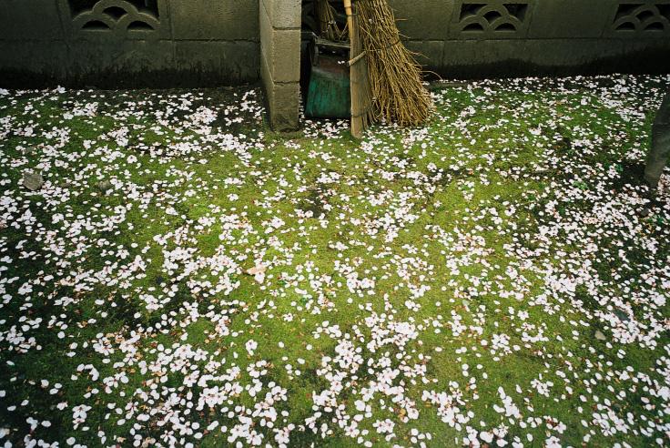 春死_c0195272_13325874.jpg