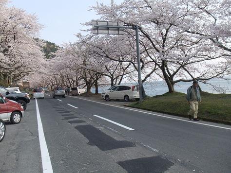 桜満開_a0087789_2013086.jpg