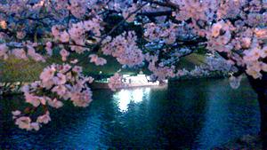 彦根の夜桜2012_c0093196_11171859.jpg