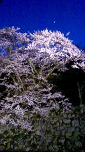 彦根の夜桜2012_c0093196_11173518.jpg