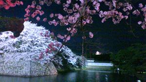 彦根の夜桜2012_c0093196_111779.jpg
